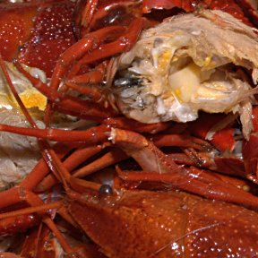 Crayfish ... or what's left of them after they've been chomped on by a Swede!
